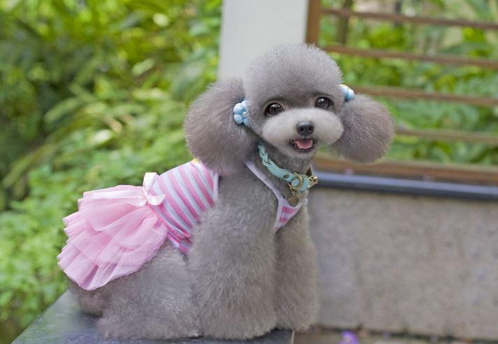 Striped_dog_dress_pink2