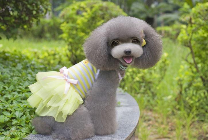 Striped_dog_dress_yellow