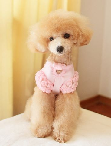 bear_dog_dress5