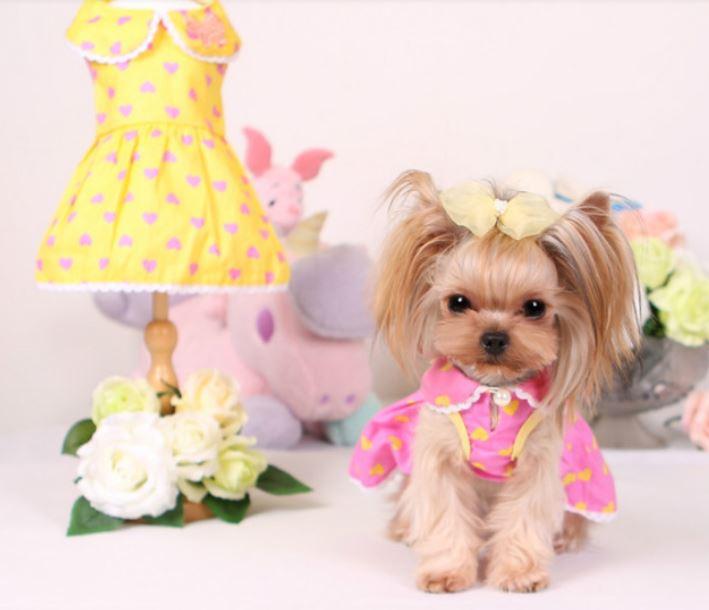 butterfly_dog_dress6