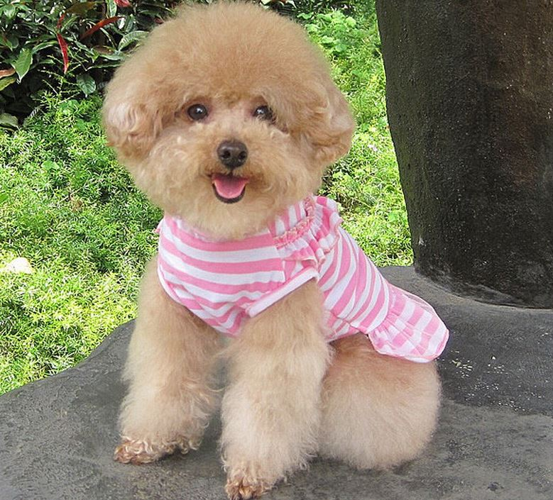 charming_striped_dog_dress_pink2
