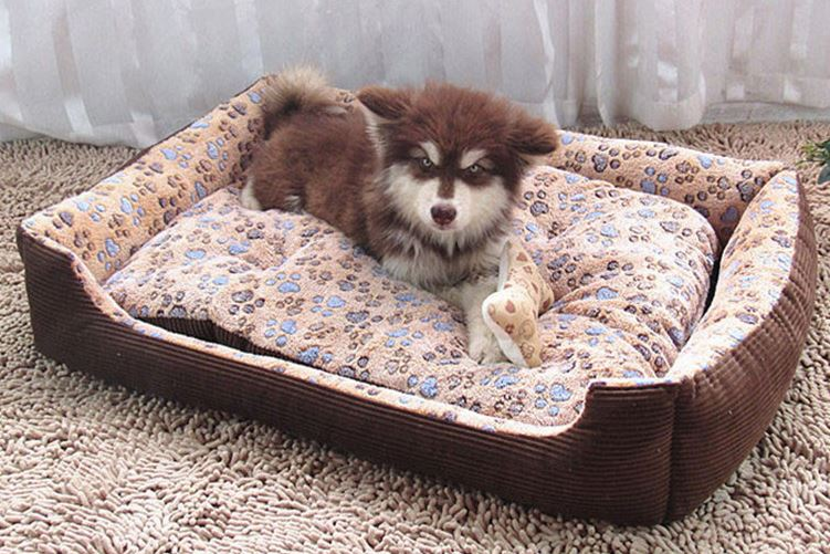Cozy Paw Printed Dog Bed