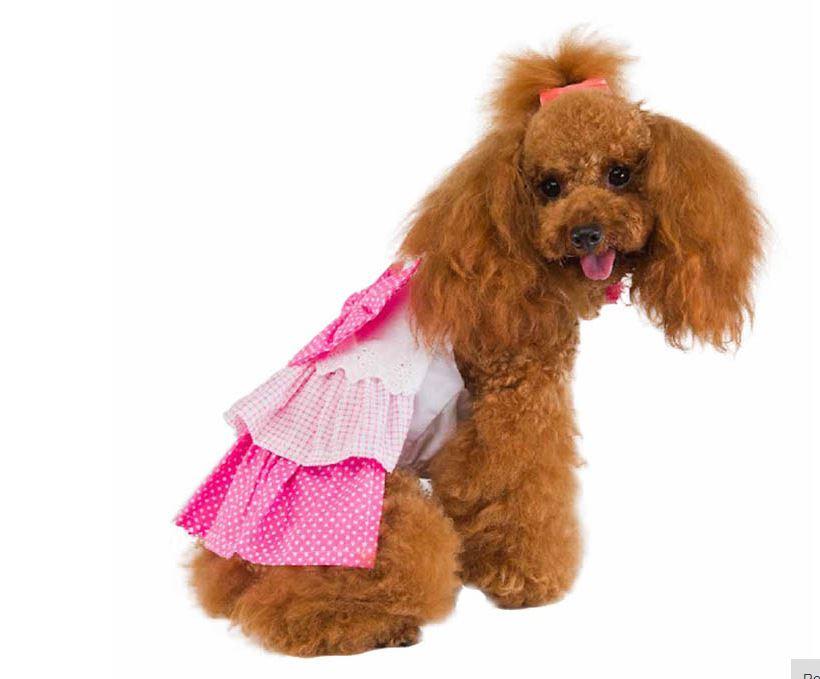 cute_dog_dress_with_polka_dot_bow2