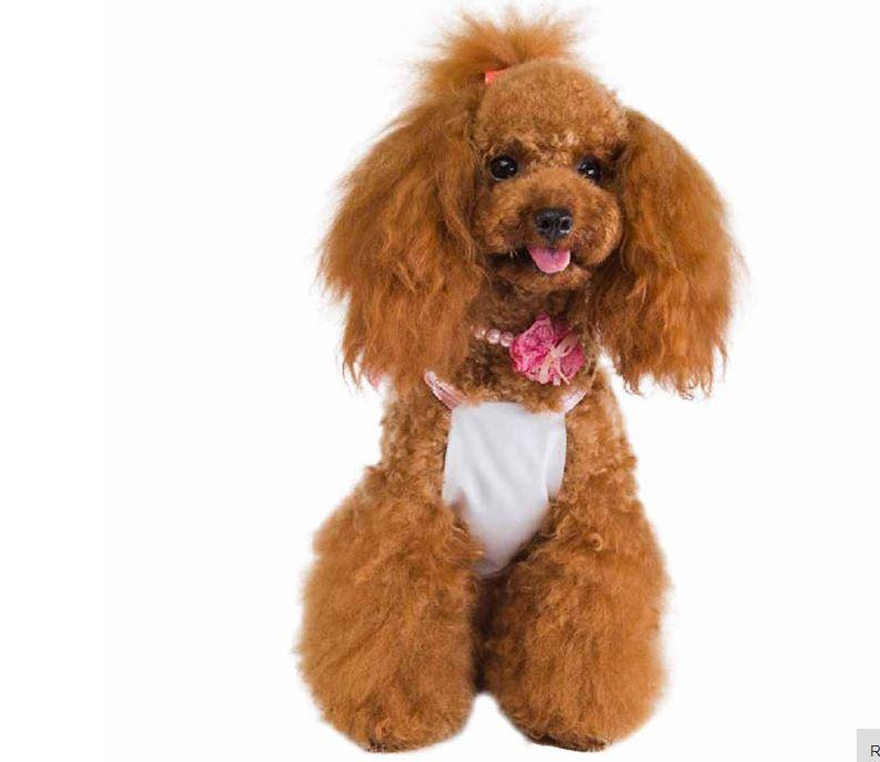 cute_dog_dress_with_polka_dot_bow5