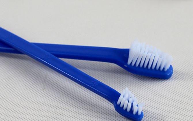 dog_toothbrush_003