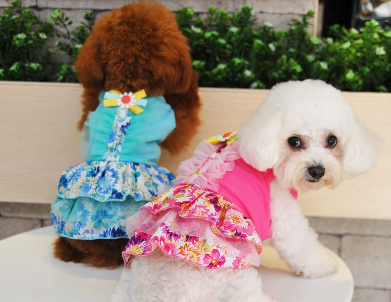 floral_printed_dog_dress2