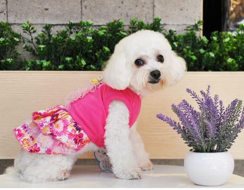 floral_printed_dog_dress5