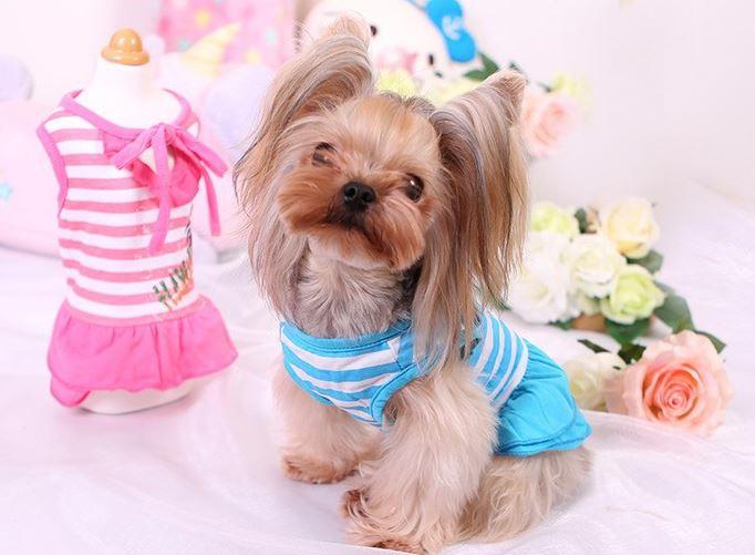 hawaii_dog_dress_new5