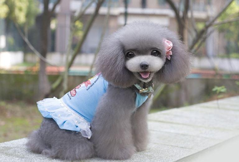 ice_cream_dog_dress_blue5