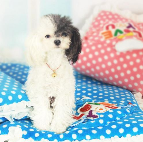 love_you_dog_blanket8