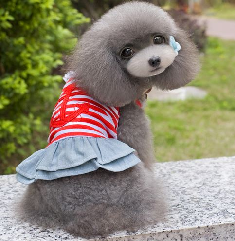 sailor_dog_dress3