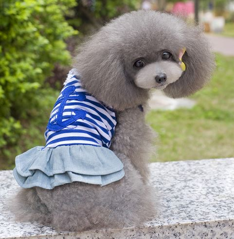sailor_dog_dress6