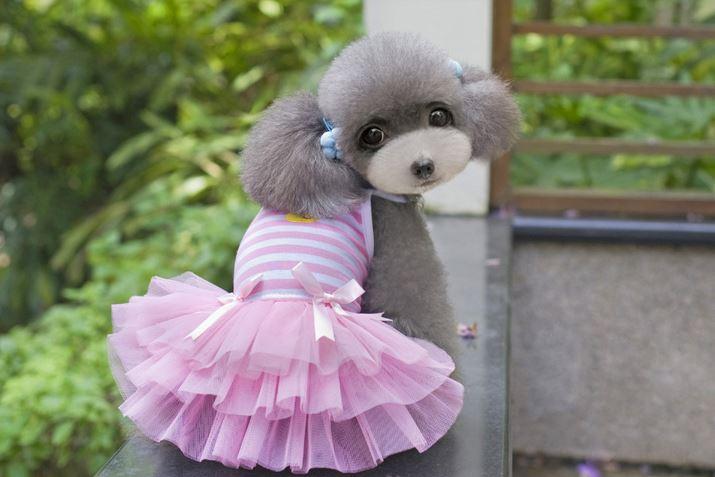 striped_dog_dress_pink
