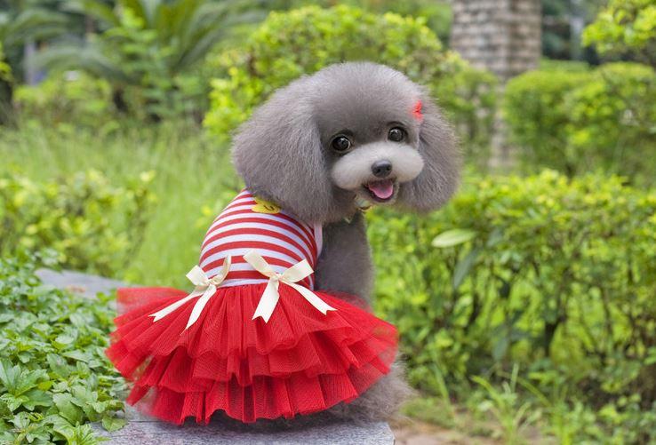 striped_dog_dress_red