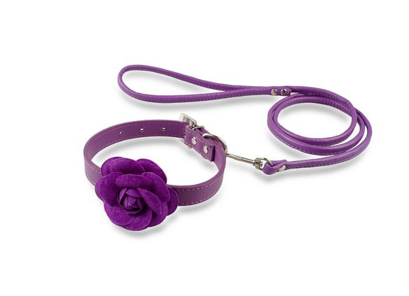 collar_leash_with_rose_purple