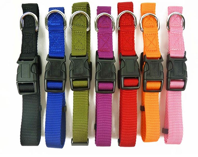 colorful_dog_collar_with_leash2