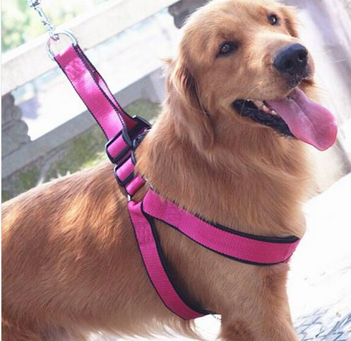 nice_dog_harness_with_leash1