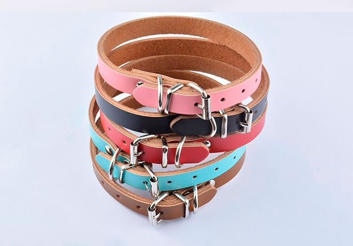 simple_colorful_dog_collar3