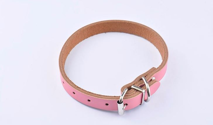 simple_colorful_dog_collar_pink
