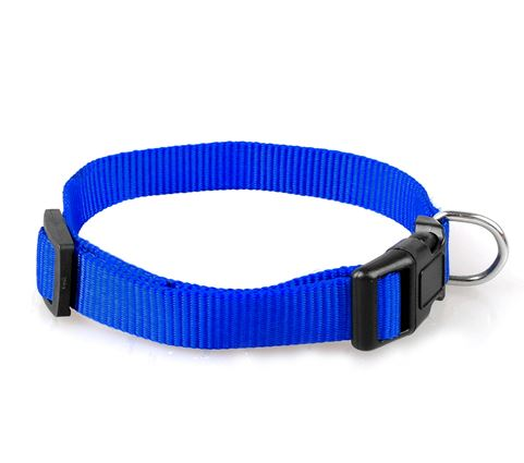 simple_dog_collar_blue