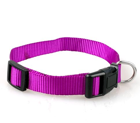 simple_dog_collar_purple