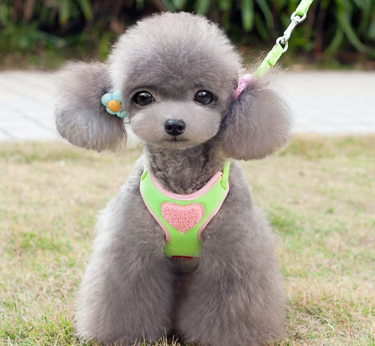 soft_dog_harness_with_leash2